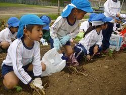 芋掘り (3).JPG