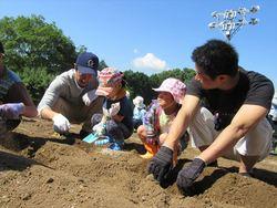 芋苗植え002_.JPG